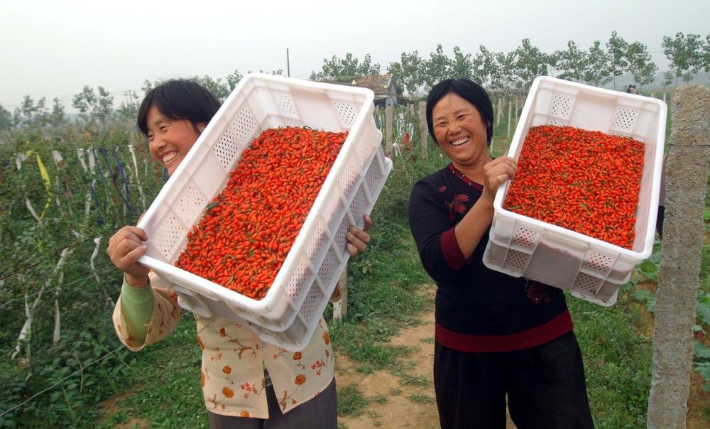 Заказать ягоды Годжи в Китае
